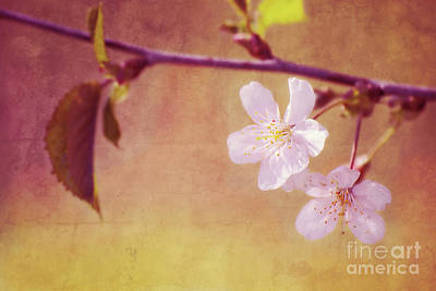 Florales Photograph - Primavera by Angela Doelling AD DESIGN Photo and PhotoArt