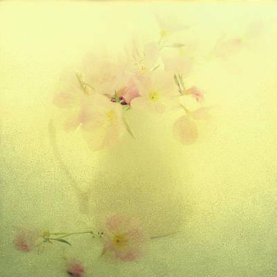 Primrose In Pastel Art Print by Linde Townsend