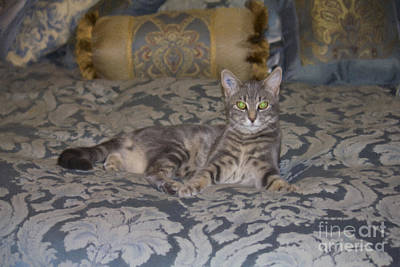 Photograph - Prince Lucius by Donna L Munro