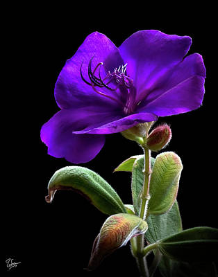 Photograph - Princess Flower by Endre Balogh