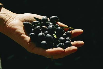 Black Olives Photograph - Prized Worldwide, These Fresh by Ira Block