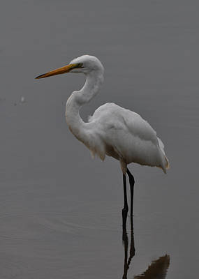 Bird Photograph - Profile Small Egret Fishing - C3293b by Paul Lyndon Phillips