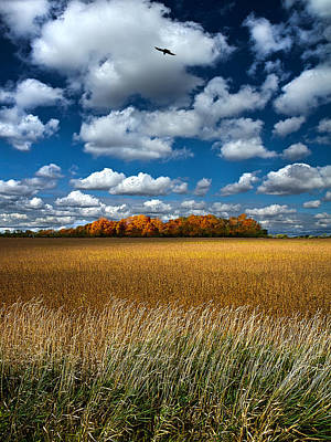 Fall Colors Photograph - Prominence  by Phil Koch