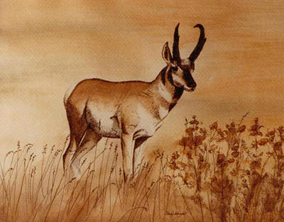Art Print featuring the painting Pronghorn Antelope by Cindy Wright