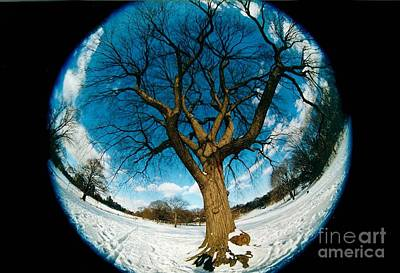 Prospect Park Tree Art Print
