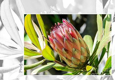 Photograph - Protea 2 by Fran Woods