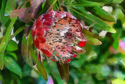 Digital Art - Protea by Fran Woods