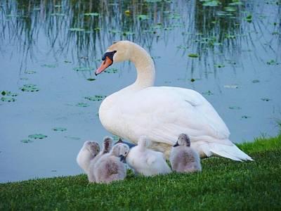 Proud Mother Swan Art Print by Jeanette Oberholtzer