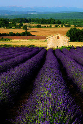 Photograph - Provencal Summers by John Galbo