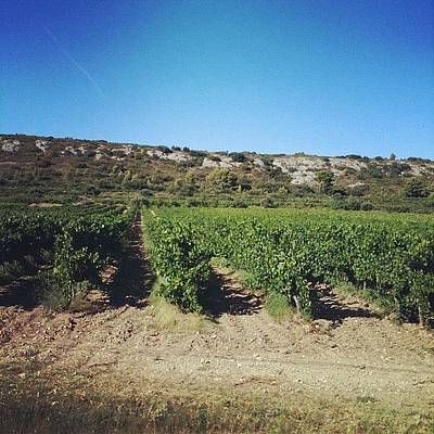 Vineyard Photograph - #provence #vineyards #wine #summer by Romain Giacalone