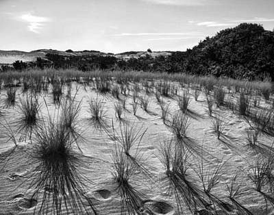 Photograph - Province Land Grasses by Tammy Wetzel
