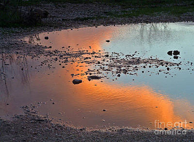 Photograph - Puddle by Mary Attard