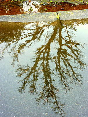 Photograph - Puddle Reflections by Cindy Wright