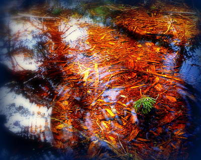 Photograph - Puddle Ripples And Reflections by Cindy Wright