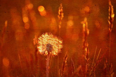 Photograph - Puff Of Sunset by Emily Stauring