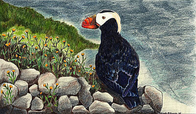 Drawing - Puffin by Wendy McKennon