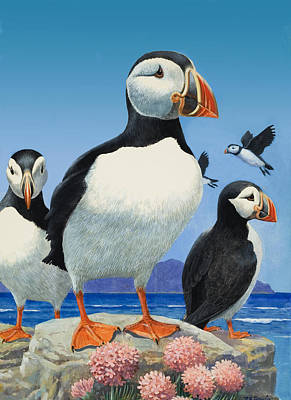 Puffin Painting - Puffins by R B Davis