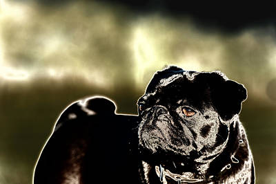 Digital Art - Pug by Veronica Busch