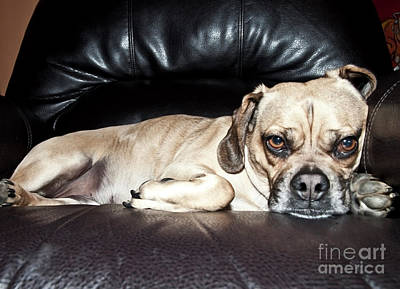 Photograph - Puggle Attitude by Jeannette Hunt