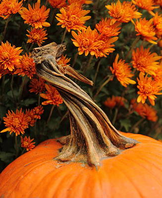 Photograph - Pumpkin And Mums by Coby Cooper