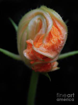 Photograph - Pumpkin Baby by Mark Holbrook
