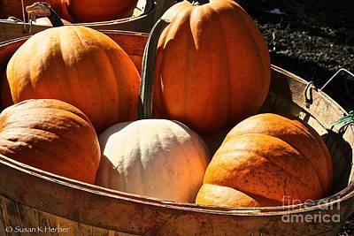 Photograph - Pumpkin Basket by Susan Herber