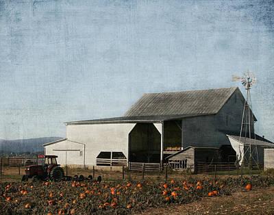 Photograph - Pumpkin Farm by Kim Hojnacki