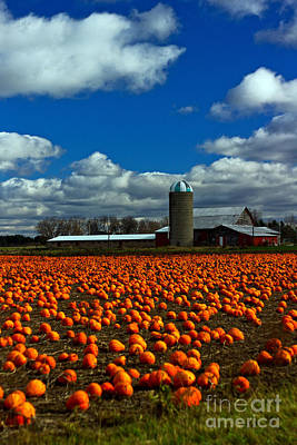 Pumpkin Farm Art Print by Randall  Cogle