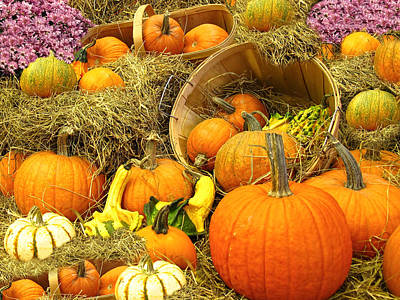Photograph - Pumpkin Harvest In The Countryside by Chantal PhotoPix