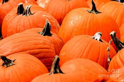 Photograph - Pumpkin Harvest by Maria Urso