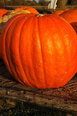 Photograph - Largest Pumpkin by LeeAnn McLaneGoetz McLaneGoetzStudioLLCcom