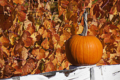 Grapevine Photograph - Pumpkin On White Fence Post by Garry Gay