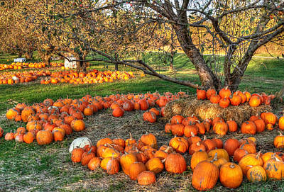 Photograph - Pumpkin Orchard by Coby Cooper