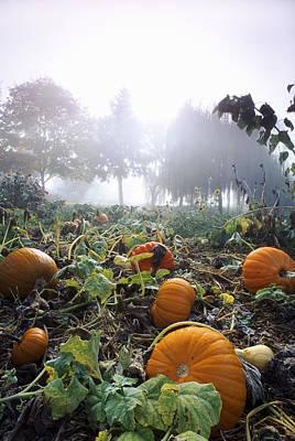 Pumpkin Patch, British Columbia Print by David Nunuk