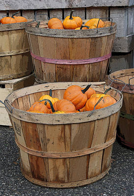 Photograph - Pumpkin Season by Margie Avellino