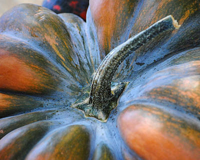 Photograph - Pumpkin Stem by Jai Johnson