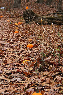 Photograph - Pumpkin Trail by Susan Herber