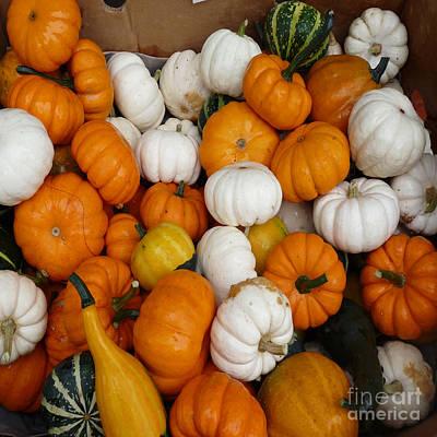 Photograph - Pumpkins And Gourds  by David Bearden