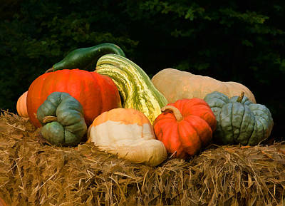 Photograph - Pumpkins And Gourds by Steve Zimic