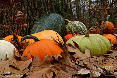 Photograph - Pumpkins And More Pumpkins by Susan Herber