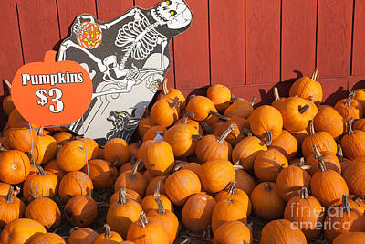 Photograph - Pumpkins For Sale I by Clarence Holmes