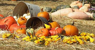 Pumpkins Print by Laurie Kidd