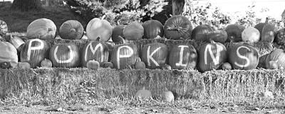 Photograph - Pumpkins P U M P K I N S Bw by James BO Insogna