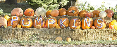Photograph - Pumpkins P U M P K I N S by James BO Insogna
