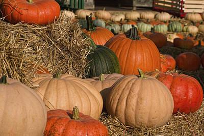 Pumpkins Pumpkins Everywhere Art Print by Kathy Clark