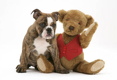 Brindle Photograph - Pup And Teddy Bear by Jane Burton