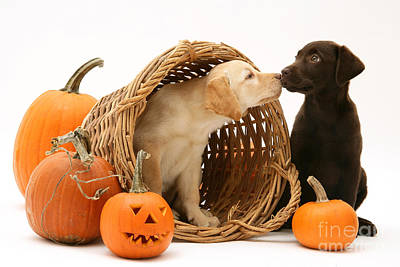 Puppies At Halloween Print by Jane Burton