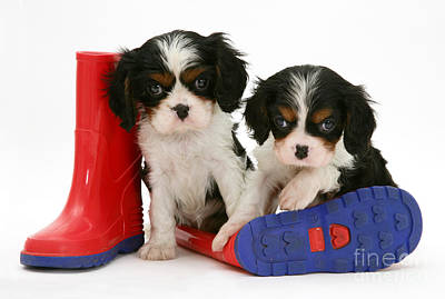 Puppies With Rain Boats Art Print by Jane Burton