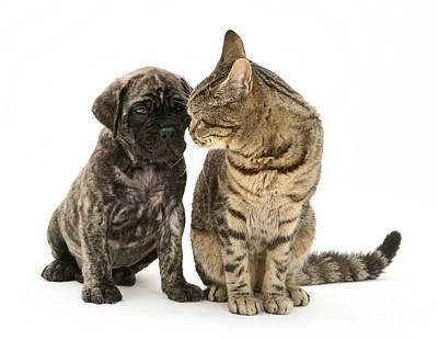 Brindle Photograph - Puppy And Cat by Jane Burton