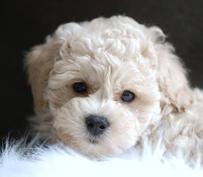Puppy Dog Eyes Art Print